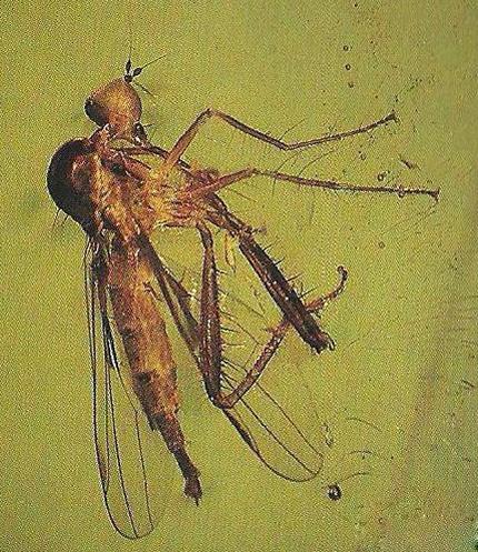 飞行动物昆虫类