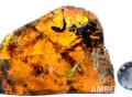 琥珀中的雏鸟标本在沪亮相7月起在上海自然博物馆展出